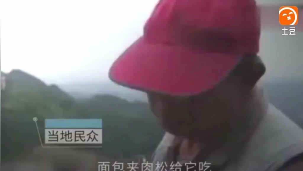 """台湾一只柴犬因为只理睬日本游客爆红网络,被网友戏称为""""汉奸狗"""