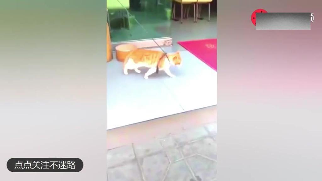 你们的喵星人都弱爆了 这不是传说中的猫舞蹈么!