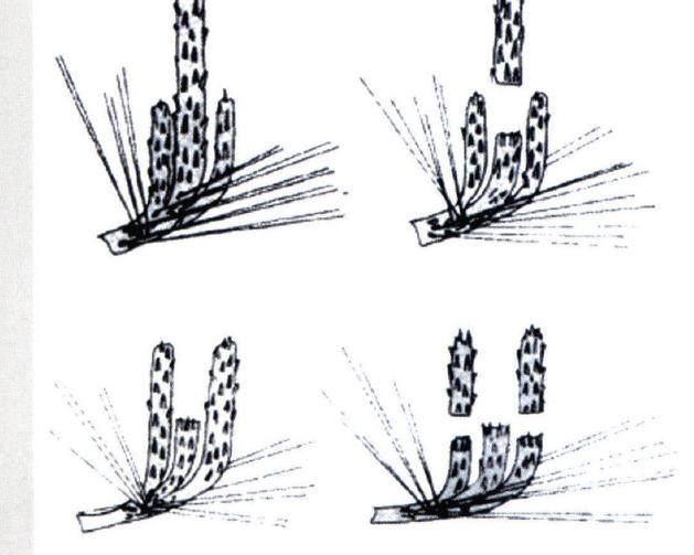 松树叶怎么画简笔画