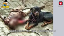 养了3年的狗狗把主人咬死?躺地上无人敢救,背后真相是什么?