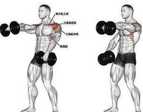 三角肌锻炼_动作二:哑铃侧平举:锻炼三角肌中束部,有利增加两肩的宽度,对纠正溜肩