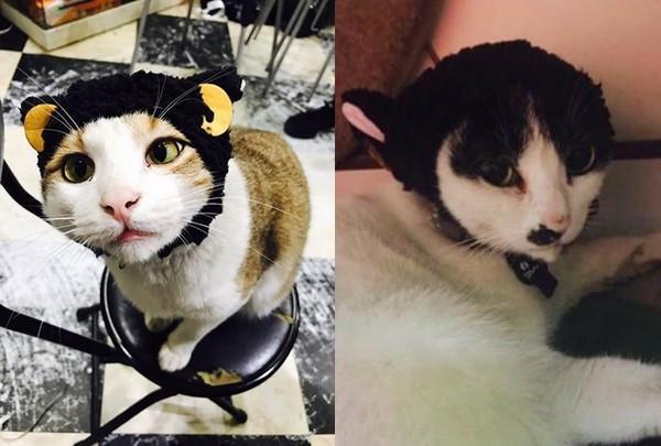 可爱猫咪头套是商家推出的有趣商品,目前还出了好多系列,其中还有