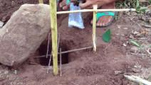 一块石头几根木棍,组成简单有效的捕鸟陷阱