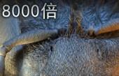 """实拍: 男子将蚊子放大8000倍, 造型酷似""""外星人""""令人惊奇不已!"""