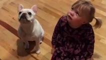 外国网友在家里训练法国斗牛犬,小女儿全程陪练,简直太可爱了