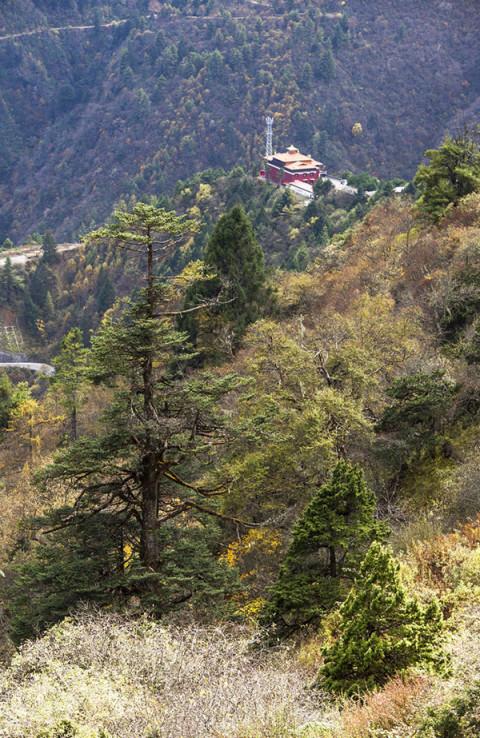 高山寺庙风景图片竖屏