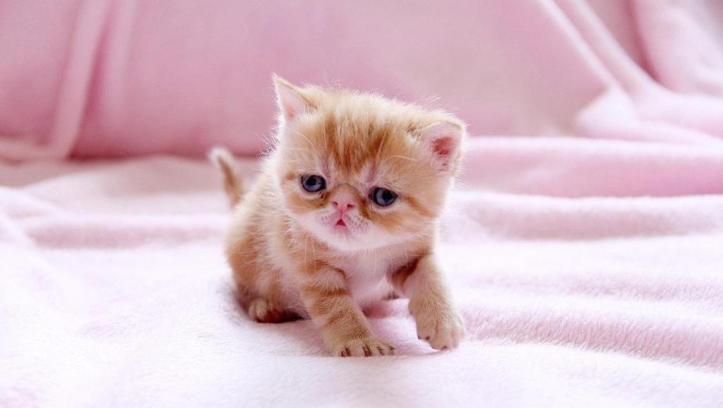 当小奶猫遇上了小奶狗 这是打架还是谈恋爱啊?