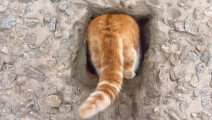 如果我拉它的猫尾巴会怎样?