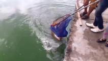 周末去河边钓鱼,一下一条大肥鱼,真过瘾