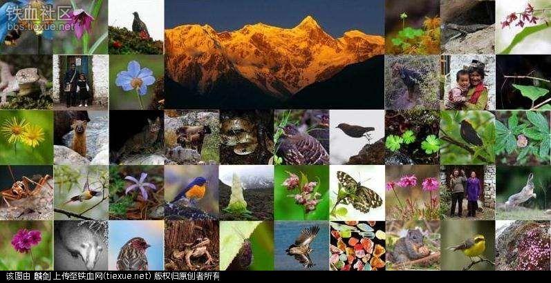 在地球上热带雨林中生活着全世界半数以上的物种(约500万种),因此