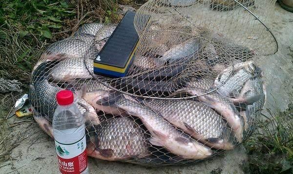 黑坑钓鲫鱼调漂的四种方法, 助钓鱼新手鱼满仓