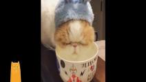 喵了个咪,我居然看一只猫喝水看了一分钟!