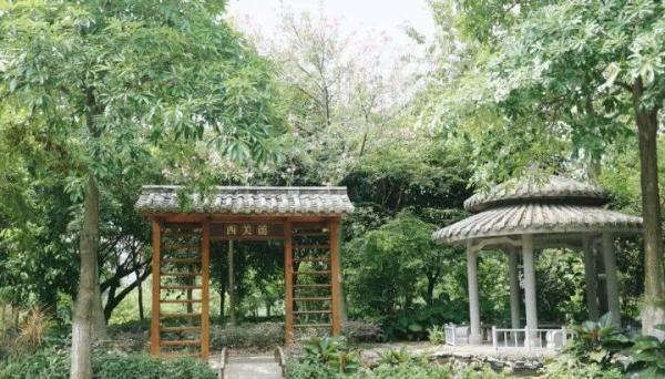阁主说:想看风景不用去西湖挤断桥, 广州就五万平方花海