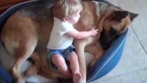 宝宝占了狗窝 强行和狗狗一起睡 狗狗的反应亮了 太逗了