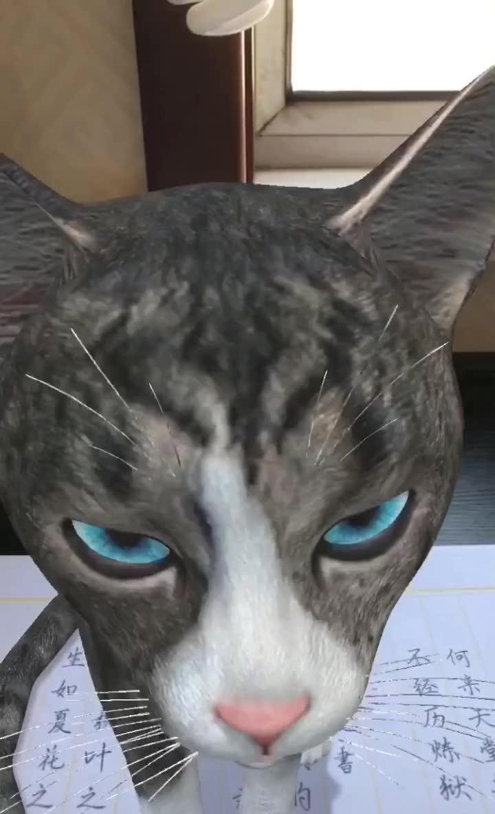 壁纸 动物 狗 狗狗 猫 猫咪 小猫 桌面 720_1184 竖版 竖屏 手机