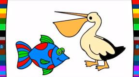 少儿早教益智短片: 绘画教程简笔画热带鱼鹈鹕八爪章鱼海狮图片