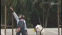 大猩猩带狗狗坐公交,全程规范还主动让座