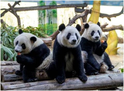 10月28日,29日到长隆野生动物园, 来一场只属于你和孩子的温馨之旅吧!