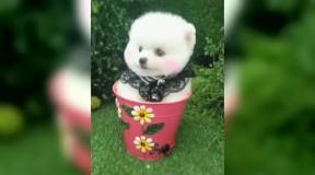 动物简笔画白熊