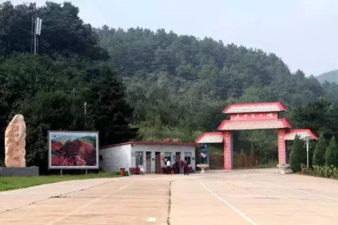 淳化仲山森林公园是省级原生态森林公园,总面积28平方公里,有公路