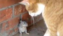 现实版的猫和老鼠......作为猫的尊严呢?