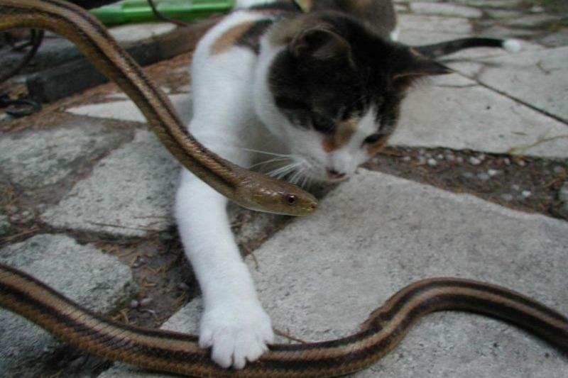 一只狗狗被蛇追杀,猫咪仗义出手狂揍蛇!