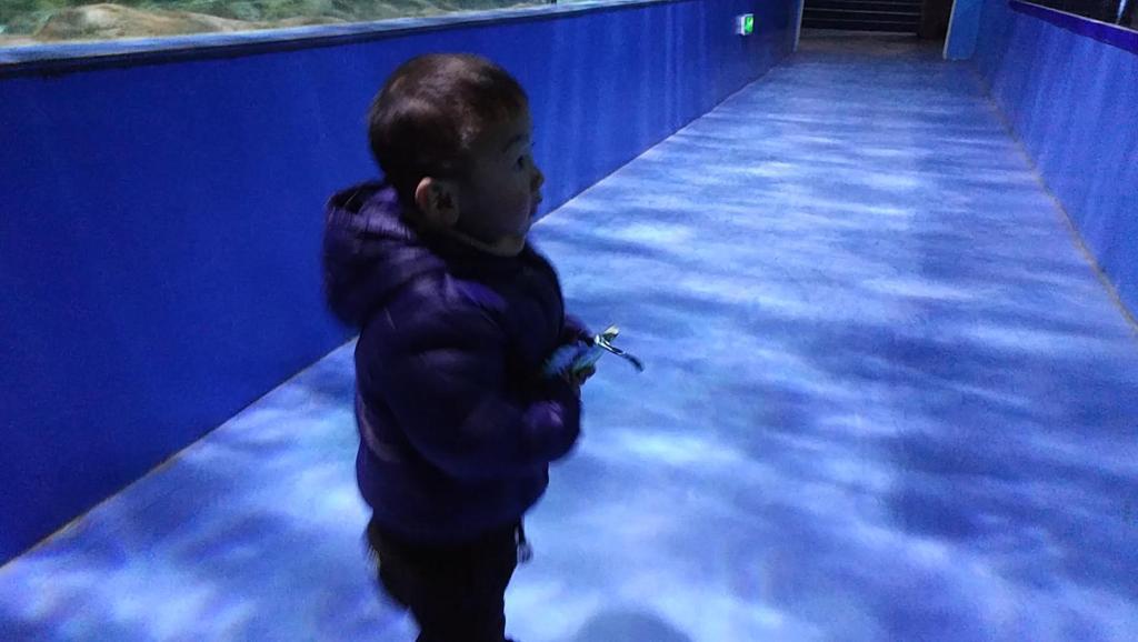 海底隧道看鲨鱼海龟视频2018晨晨的玩具