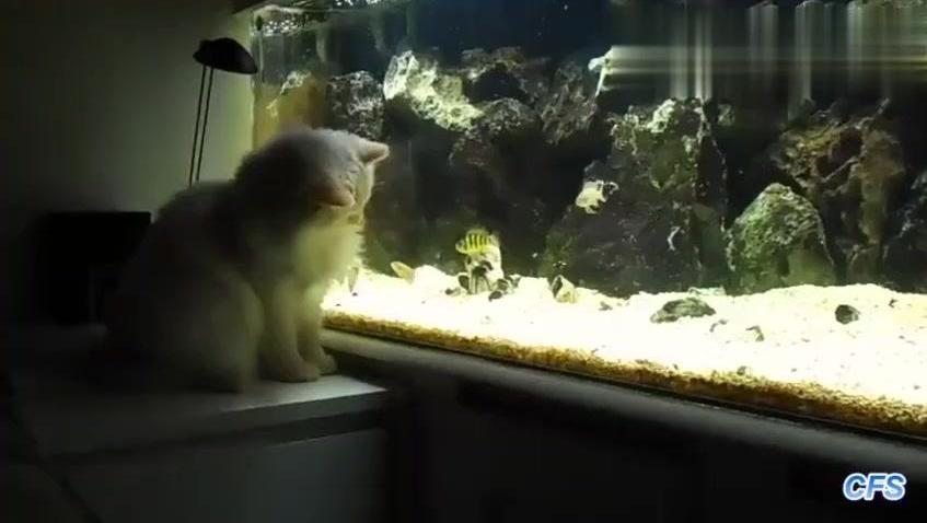 养鱼爱好者家里有猫咪的烦恼
