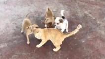 兄弟们,这就是差距。三个狗咬一个猫是这样的,而面对老虎就不一样了