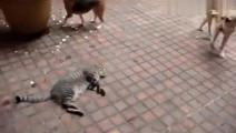 两只狗狗打架,淡定的猫在一旁睡觉,直到被踩了一脚