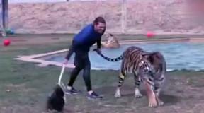 动物世界中猛兽的战斗力排行榜: 老虎排第五, 第一名你不得不服!