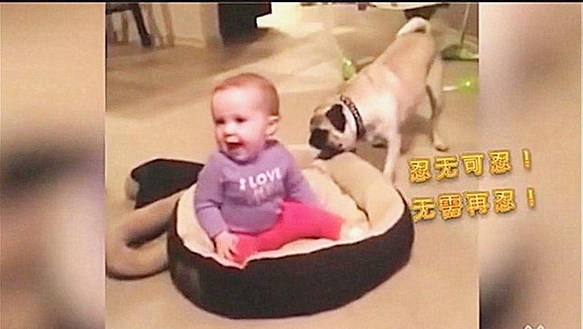 宝宝跟狗狗抢窝睡,小沙皮忍无可忍奋起反抗,俩萌宝太逗了!