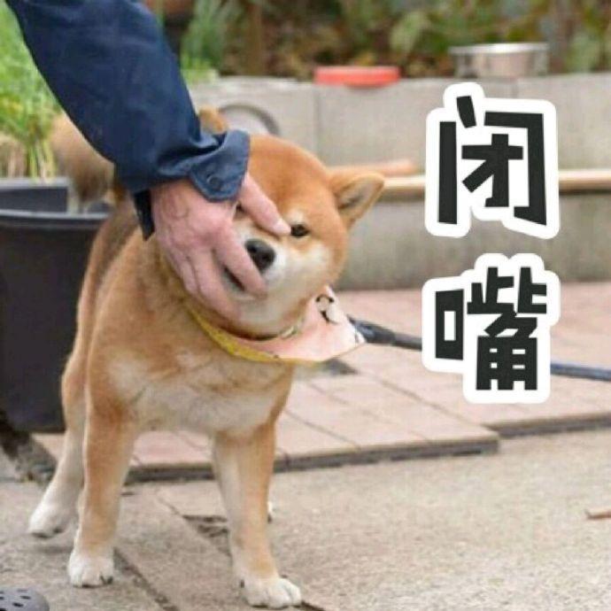 一起来斗图# 柴犬搞笑表情包无水印