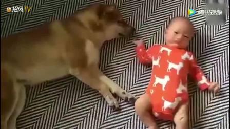 狗狗睡的正香, 小宝宝突然一拳揍醒了狗狗, 狗狗的举动令主人哭了