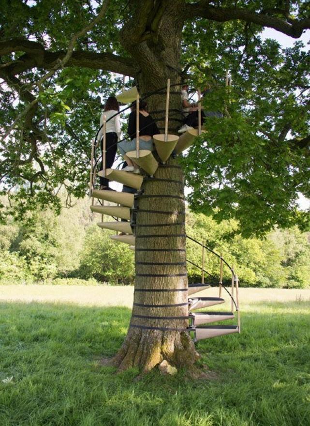 围绕着树木制作的旋转楼梯