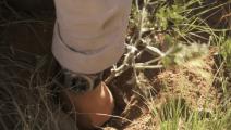 贝爷在草原,挖草原萝卜当干粮吃!