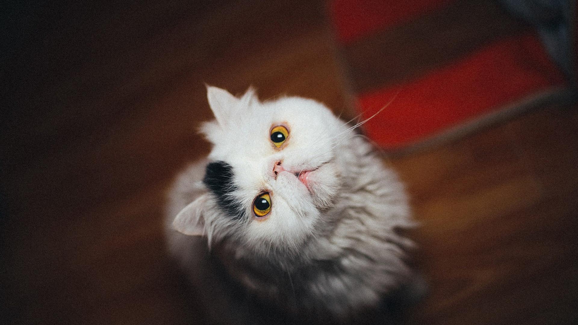 可爱呆萌宠物动物图片大全