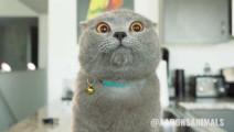 主人回家一开门,猫咪就迎上来尬了一段有趣的见面舞,好有默契