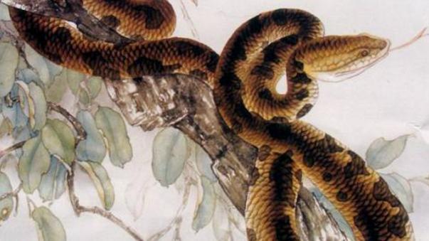 属蛇人的最佳配对生肖是谁? 命中注定, 谁也拆不散!