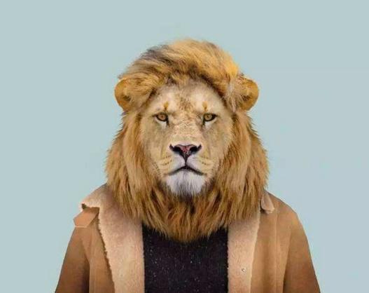 动物穿上衣服拍证件照, 狐狸狮子最形象
