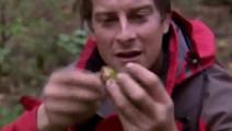 贝爷口味不是一般的重,从熊粪里找食物吃