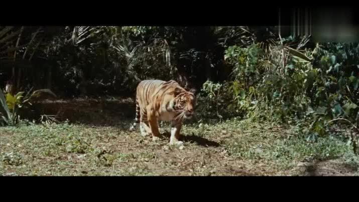 狗狗为了救小主人 与老虎疯狂厮杀