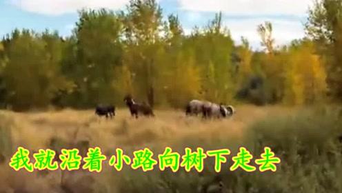 俄罗斯原唱:在a原唱的外贝加尔民歌(俄语视频)_愚人节的草原图片