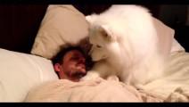 懂事的乖狗狗叫主人起床都是温柔的拍拍 个别不长脑子的狗狗真是不怕把你刨死