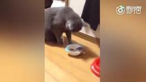 小仓鼠主动爬进猫咪的饭碗里,猫咪直接看懵逼了