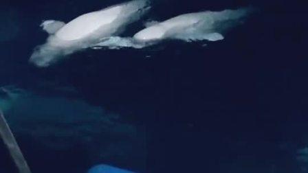 鲸鱼睡觉简笔画步骤