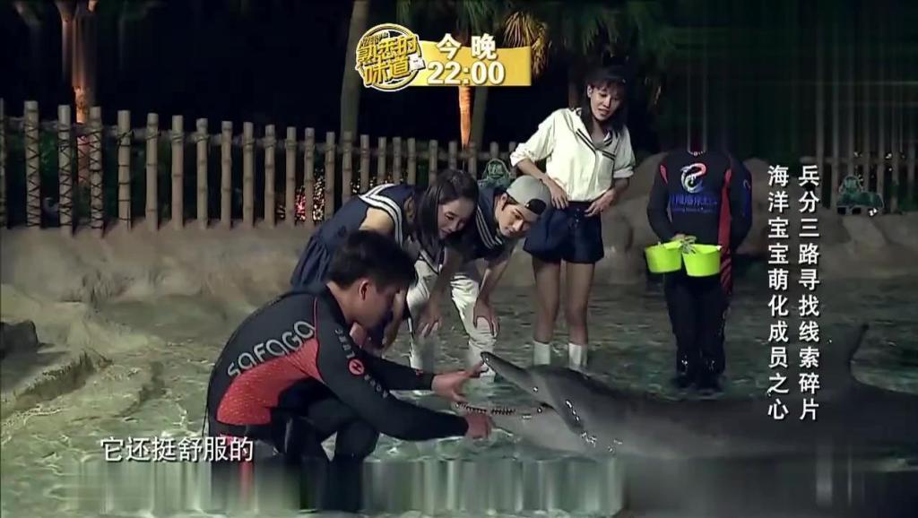 陈学冬王智受海豚青睐,给海豚刷牙萌化了!