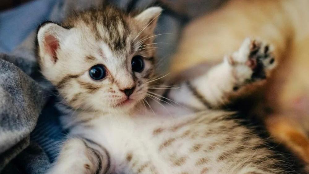 可爱带眼镜小猫图片