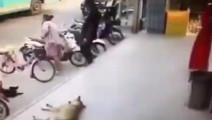人不犯狗,狗不犯人!这货活该被咬!
