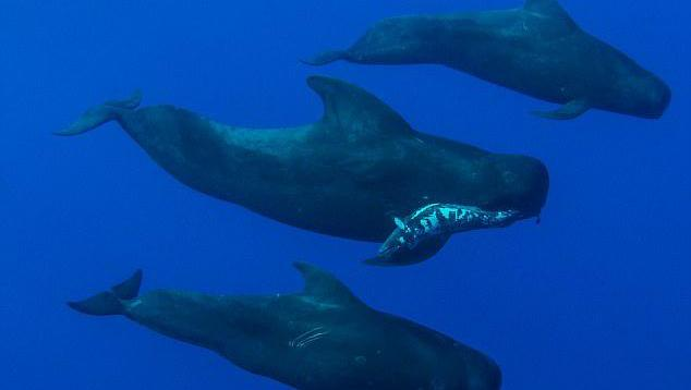 打开 打开 动物世界: 鲸鱼被鲨鱼分食 打开 一群在海里玩耍的人们,几